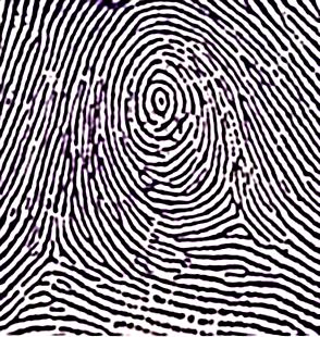 Police cloned a Michigan murder victim's fingerprint that unlocked his phone —Quartz